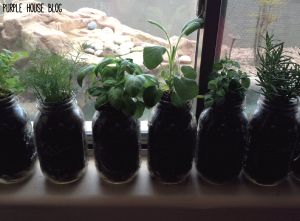herb plant 2-01