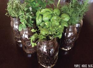 herb plant 2-03