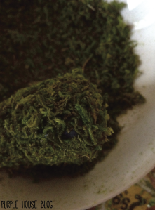 mossy rocks-04