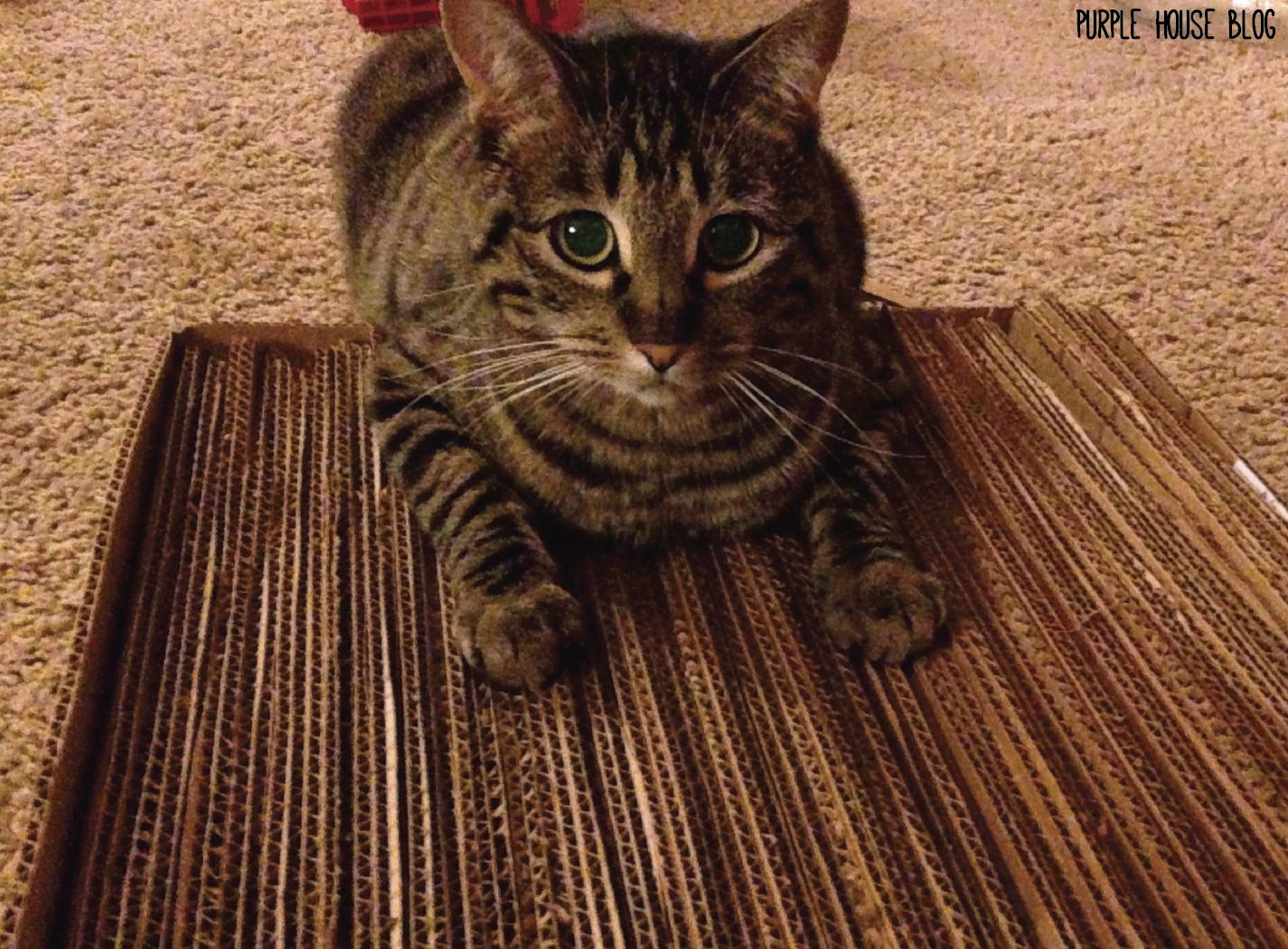 Diy Cat Scratcher Purple House Blog