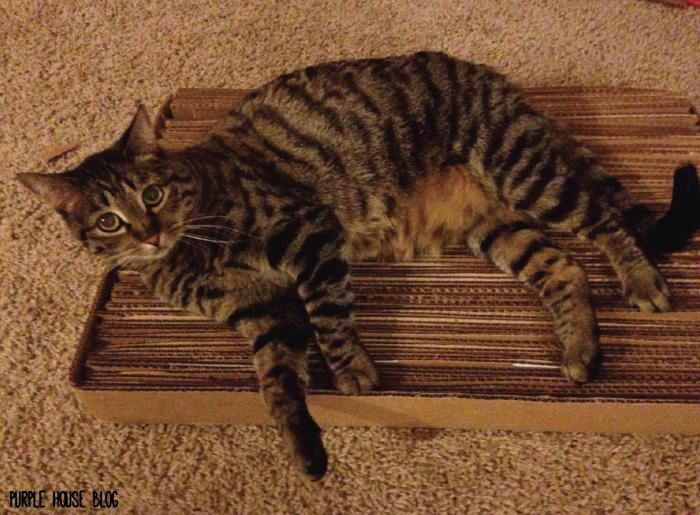 Cat Scratcher-04