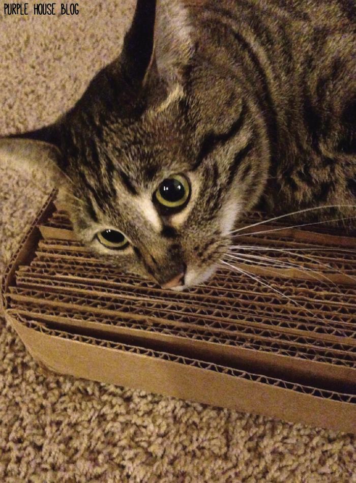 Cat Scratcherm 2-04